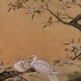 菱田春草「梨に双鳩」