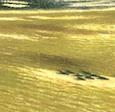 秋野不矩『渡河』