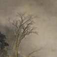 川合玉堂「深山濃霧」