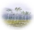 日本画、風景、作家、黒岩善隆、03
